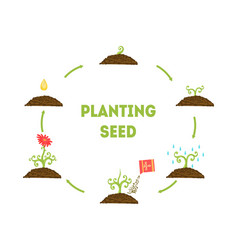 Planting seed banner stages growth flower vector