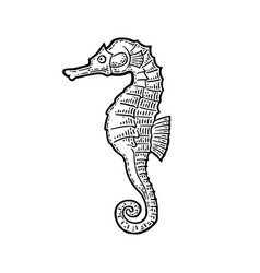 sea horse black engraving vintage vector image