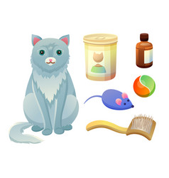 set for taking care about feline food for cat vector image