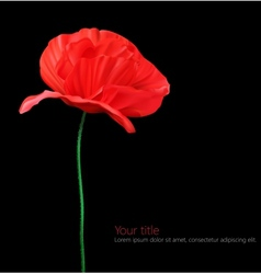 Poppy flower isolated on black background vector image vector image