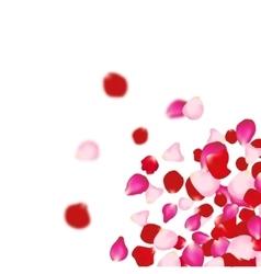 Rose petals falling background For presentations vector image