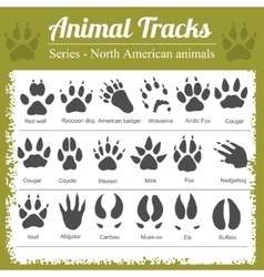 Animal Footprints - North American animals vector image