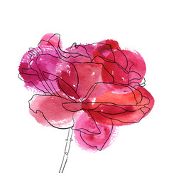 Drawing flower of rose vector