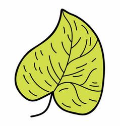 Eco linden leaf vector