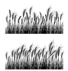 Field wheat vector