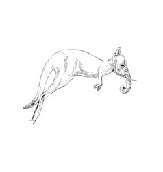 mixture animals kangaroo with elephant head vector image