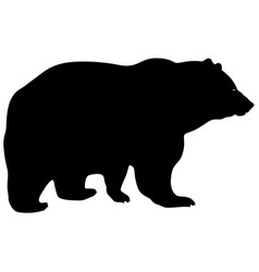 silhouette brown bear on a white background vector image