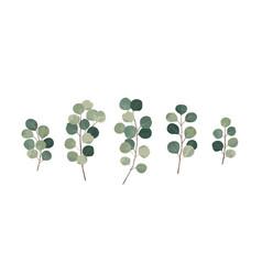 Eucalyptus greenery gum tree foliage natural vector