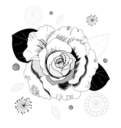 Graphic rose vector