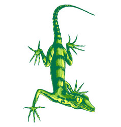 lizard with long claws vector image