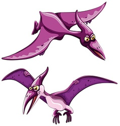 Purple pterosaur flying in the sky vector image