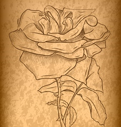 rose on the old paper vector image vector image