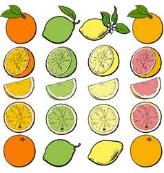 citrus fruit cutting process set - whole half vector image