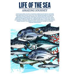 poster sea fish sketch ocean fishes life vector image