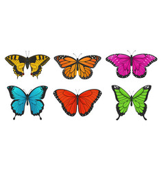 set colorful butterflies vector image