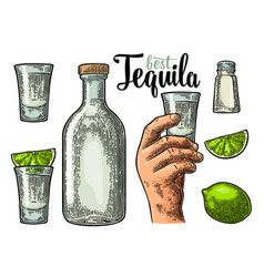 set tequila hand hold glass bottle salt lime vector image