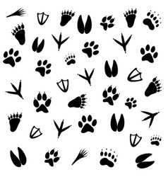 Traces of animals of different vector