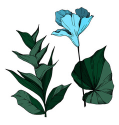 tropical flowers and leaves isolated black vector image