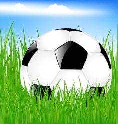 classic soccer ball in grass vector image