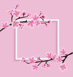 white frame with a sakura or cherry blooming vector image