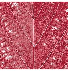 Red Leaf Background vector image