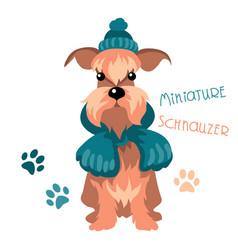 Miniature schnauzer dog in winter hat and scarf vector