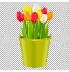 tulip in pot vector image vector image