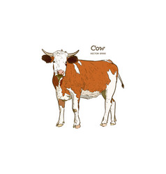 cow in graphic style and inscriptions drawing vector image