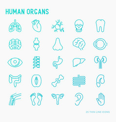 Human internal organs thin line icons set vector
