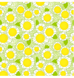 Seamless pattern with daisy flowers background vector