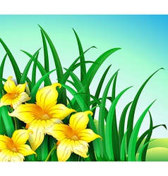 A garden at the hill with yellow flowers vector