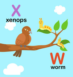 alphabet letter w-worm x-xenops vector image