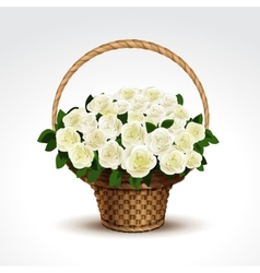 basket white roses isolated vector image