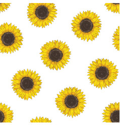 Floral seamless pattern with sunflower heads vector