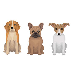 Purebred detailed drawn dogs vector