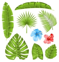 Set tropical leaves collection plants isolated vector
