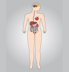 The human body vector image