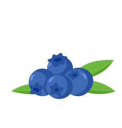 Blueberry fruit icon vector