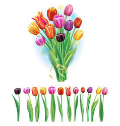 Bouquet and border with multicolor tulips vector