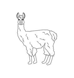 Llama alpaka vector