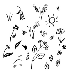 collection of flower sketches vector image