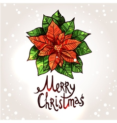 Christmas Card With Hand Drawn Poinsettia vector image vector image