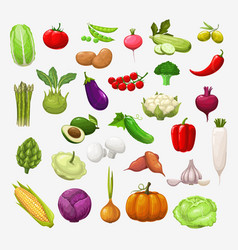 isolated vegetables and salads vector image