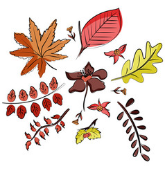 set of leaves in doodle style hand drawn vector image