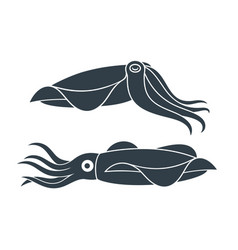 Squid icon vector