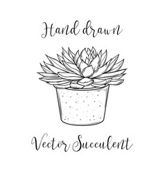 succulent plant in a concrete flower pot hand vector image