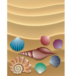 shells on the sand vector image vector image