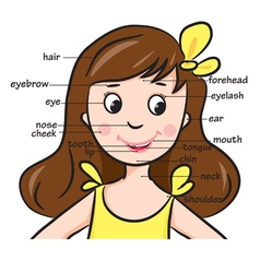 girlhead vector image