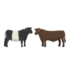 bull and cow farm animal vector image