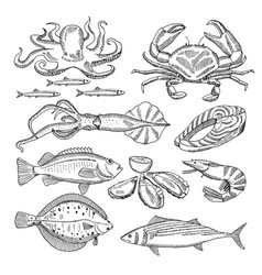 hand drawing sea food vector image